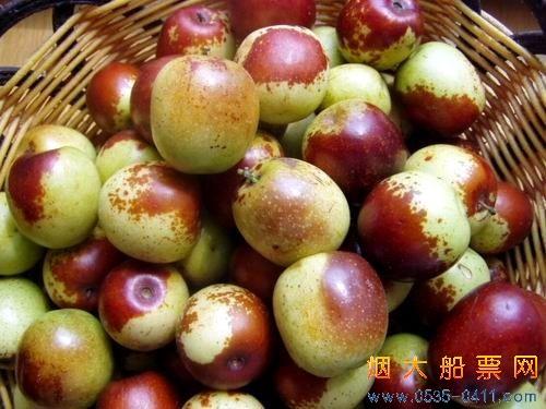 天津市大港冬枣采摘游